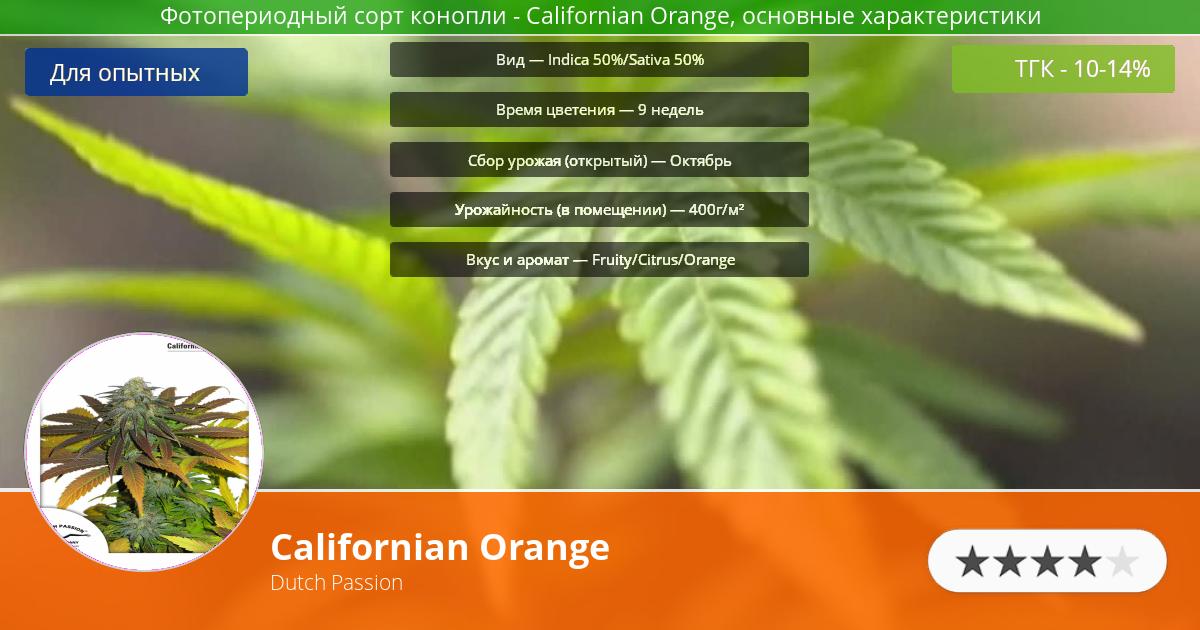 Инфограмма сорта марихуаны Californian Orange