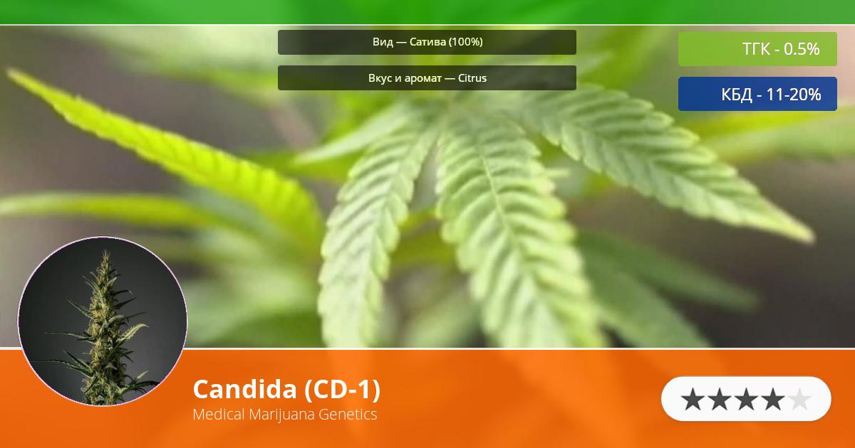Инфограмма сорта марихуаны Candida (CD-1)