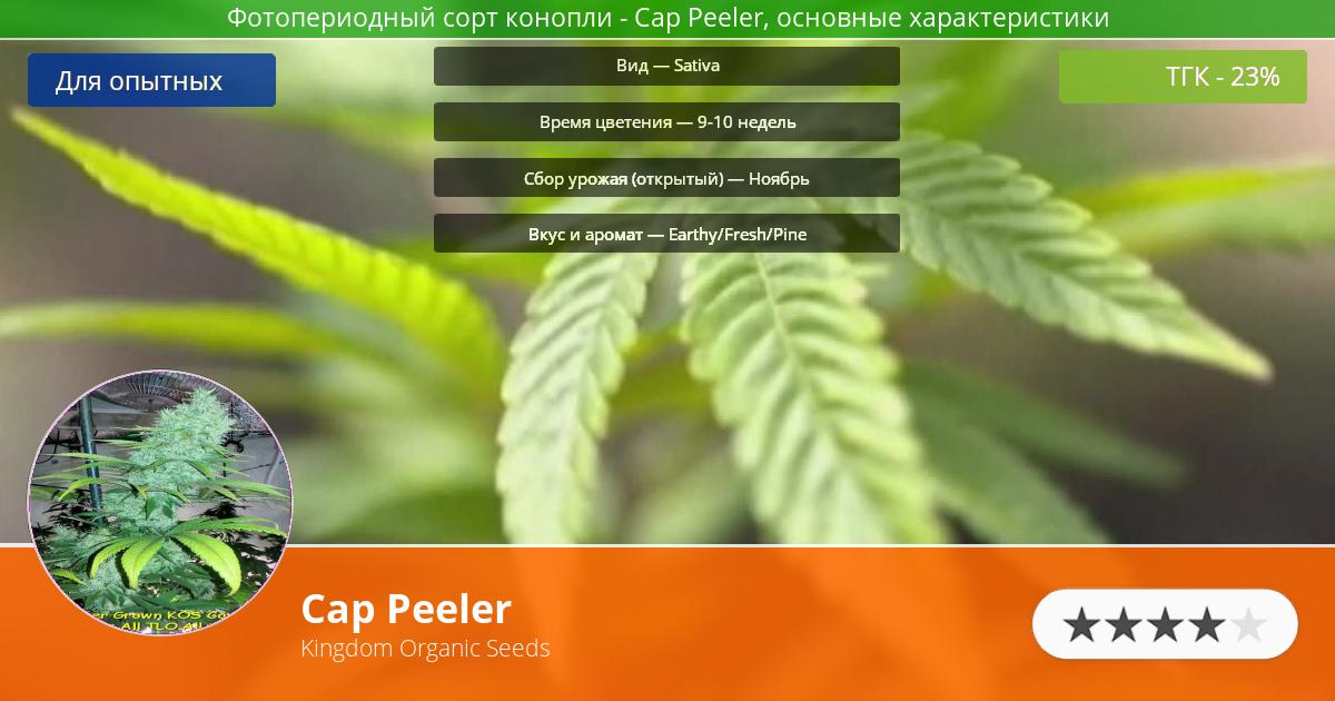 Инфограмма сорта марихуаны Cap Peeler