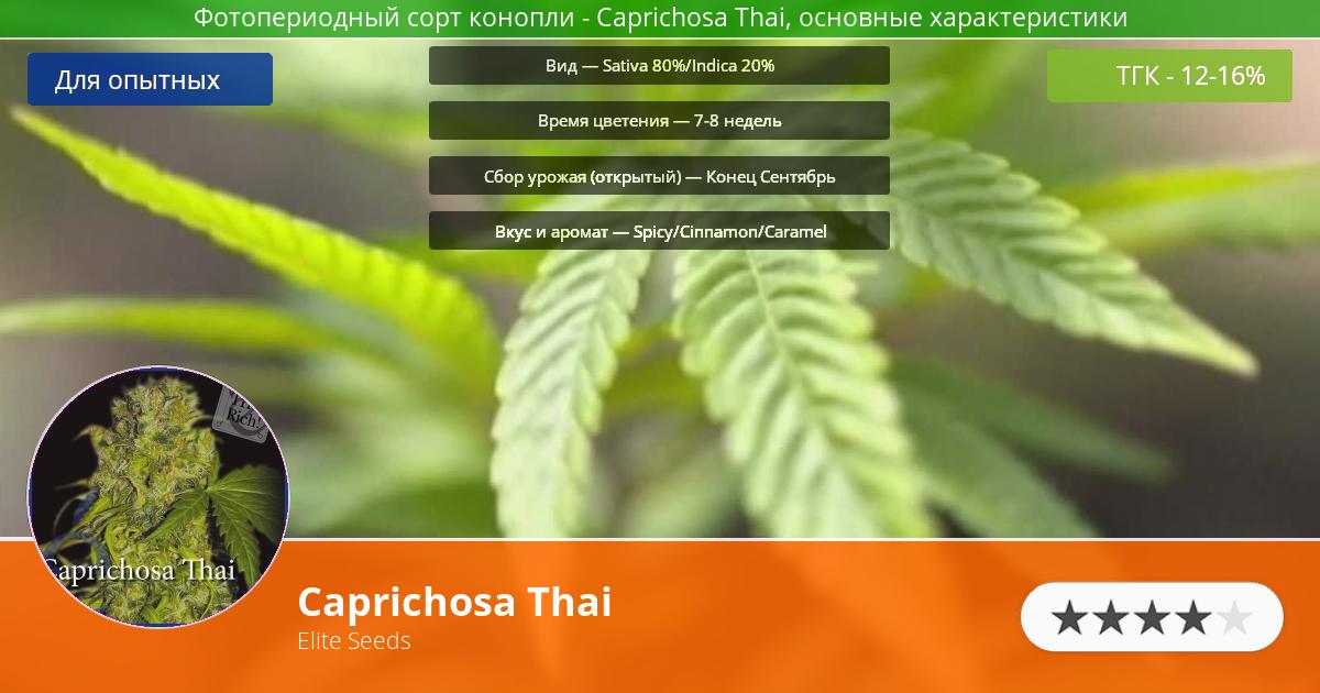 Инфограмма сорта марихуаны Caprichosa Thai