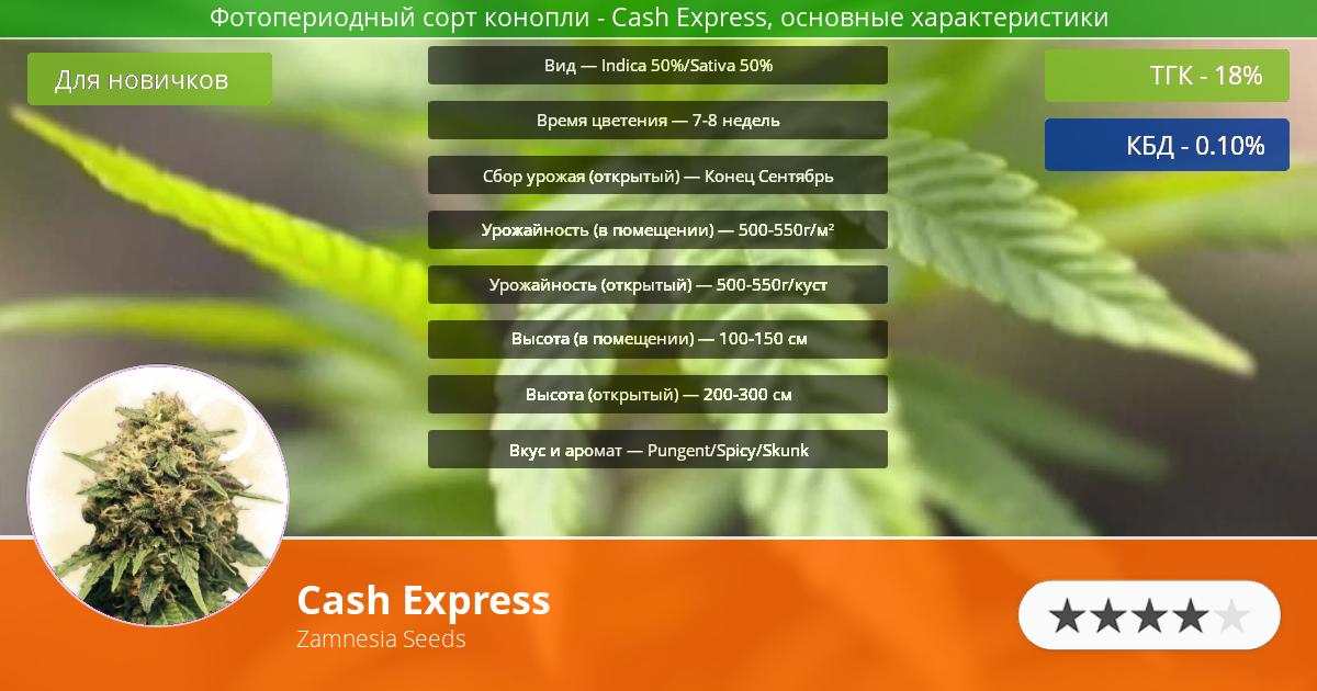 Инфограмма сорта марихуаны Cash Express