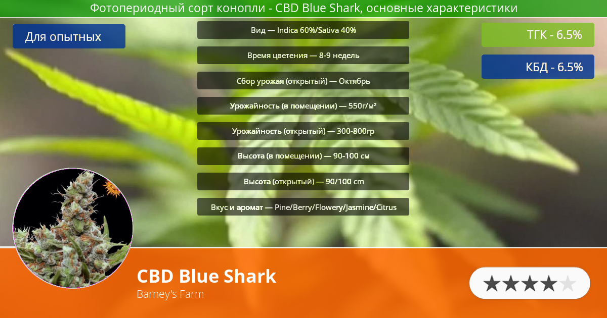 Инфограмма сорта CBD Blue Shark