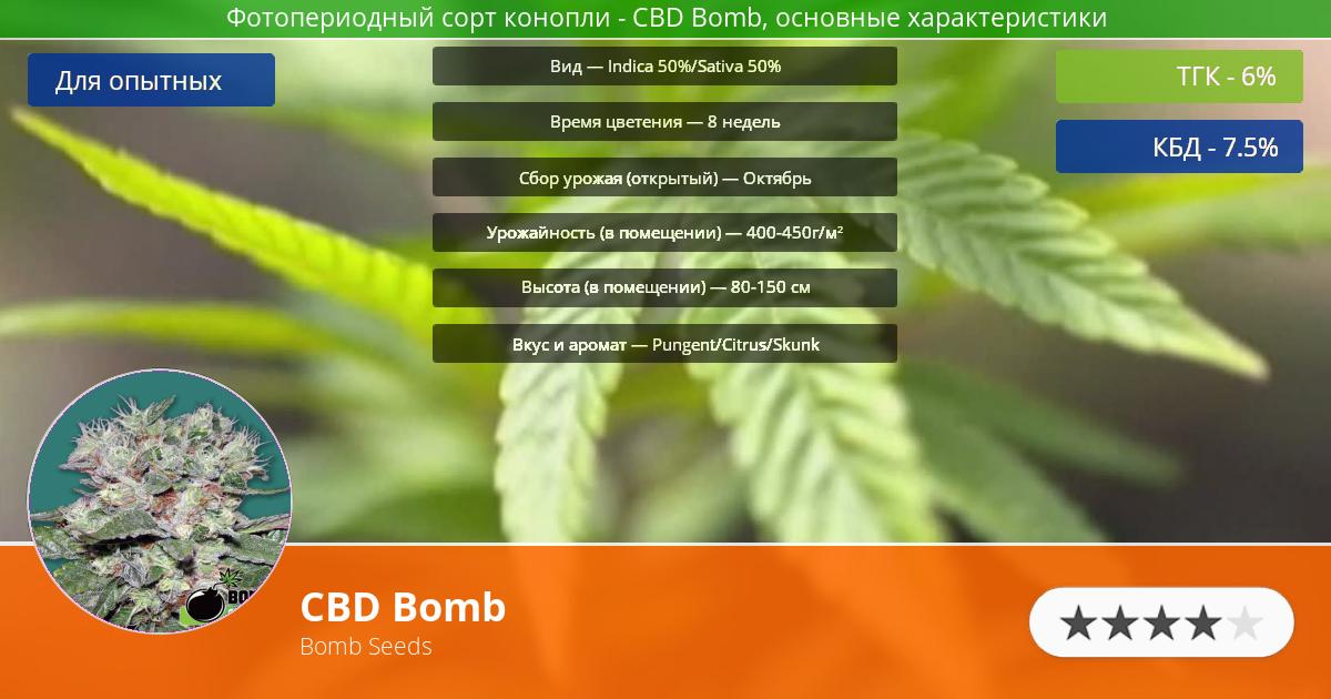 Инфограмма сорта марихуаны CBD Bomb