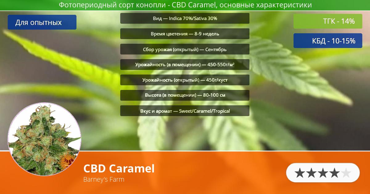 Инфограмма сорта марихуаны CBD Caramel