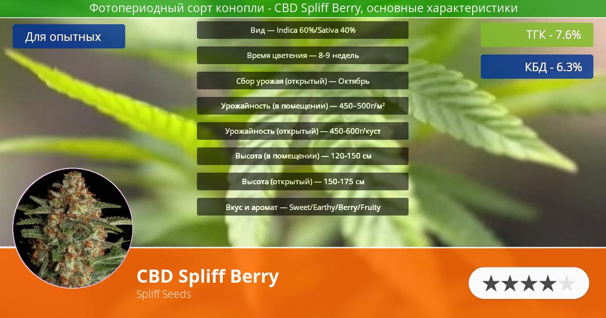 Инфограмма сорта марихуаны CBD Spliff Berry
