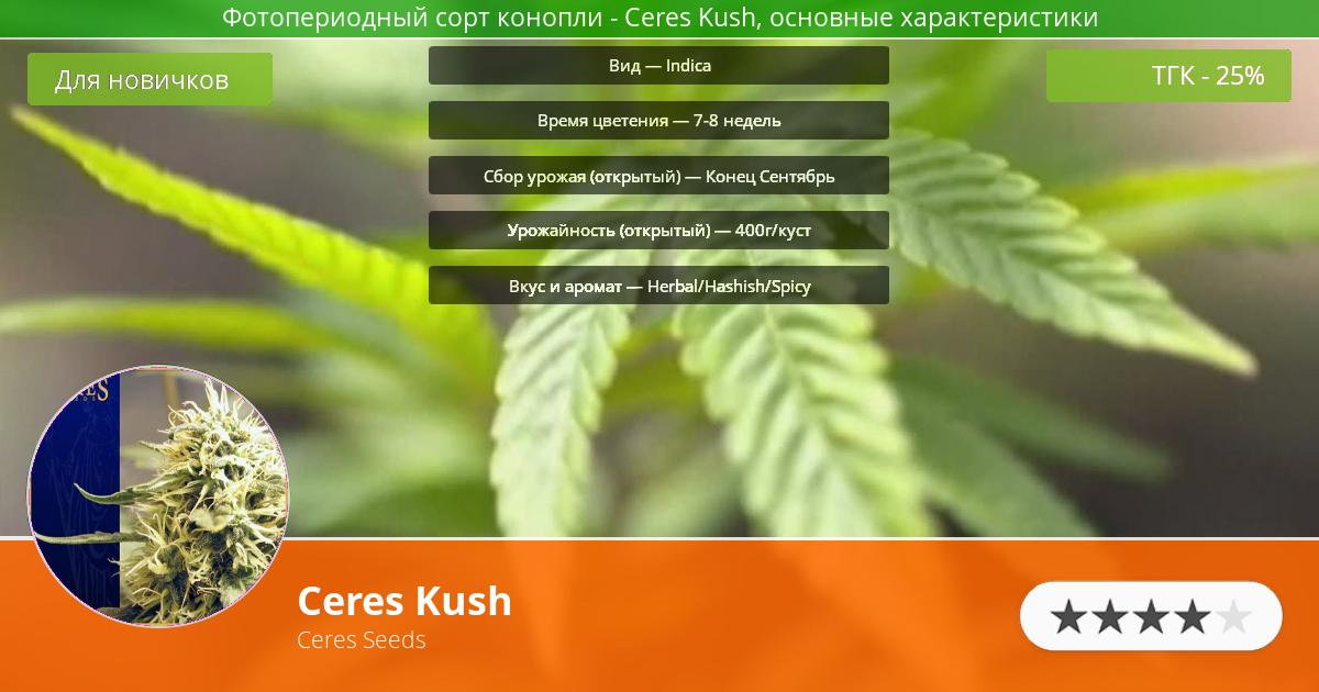 Инфограмма сорта марихуаны Ceres Kush
