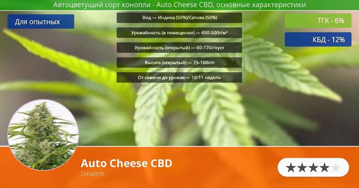 Инфограмма сорта марихуаны Auto Cheese CBD