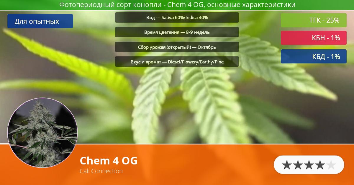 Инфограмма сорта марихуаны Chem 4 OG