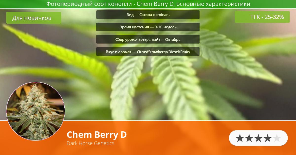 Инфограмма сорта марихуаны Chem Berry D