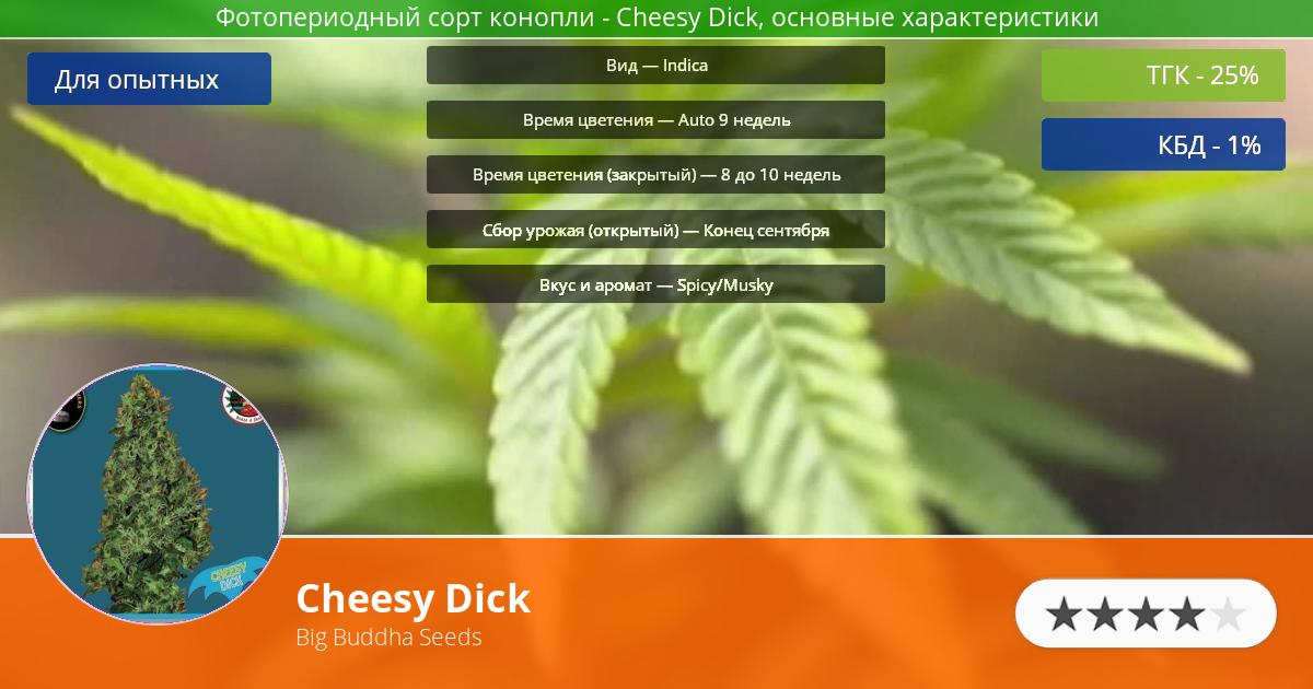 Инфограмма сорта марихуаны Cheesy Dick