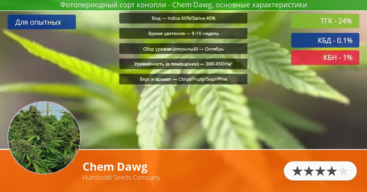 Инфограмма сорта марихуаны Chem Dawg