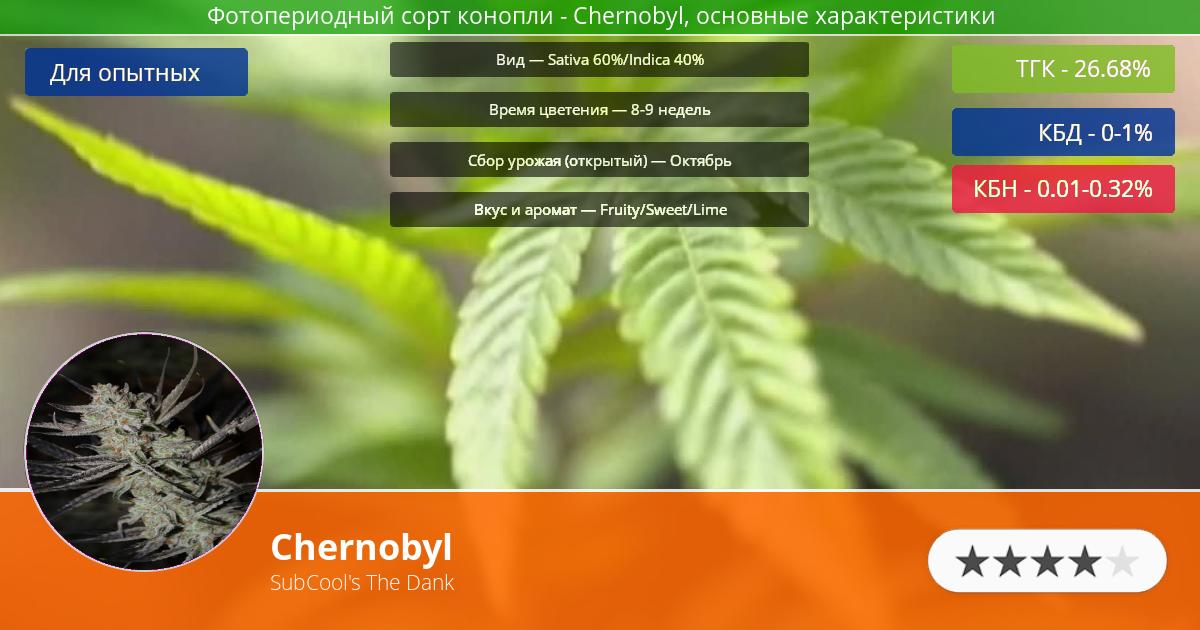 Инфограмма сорта марихуаны Chernobyl