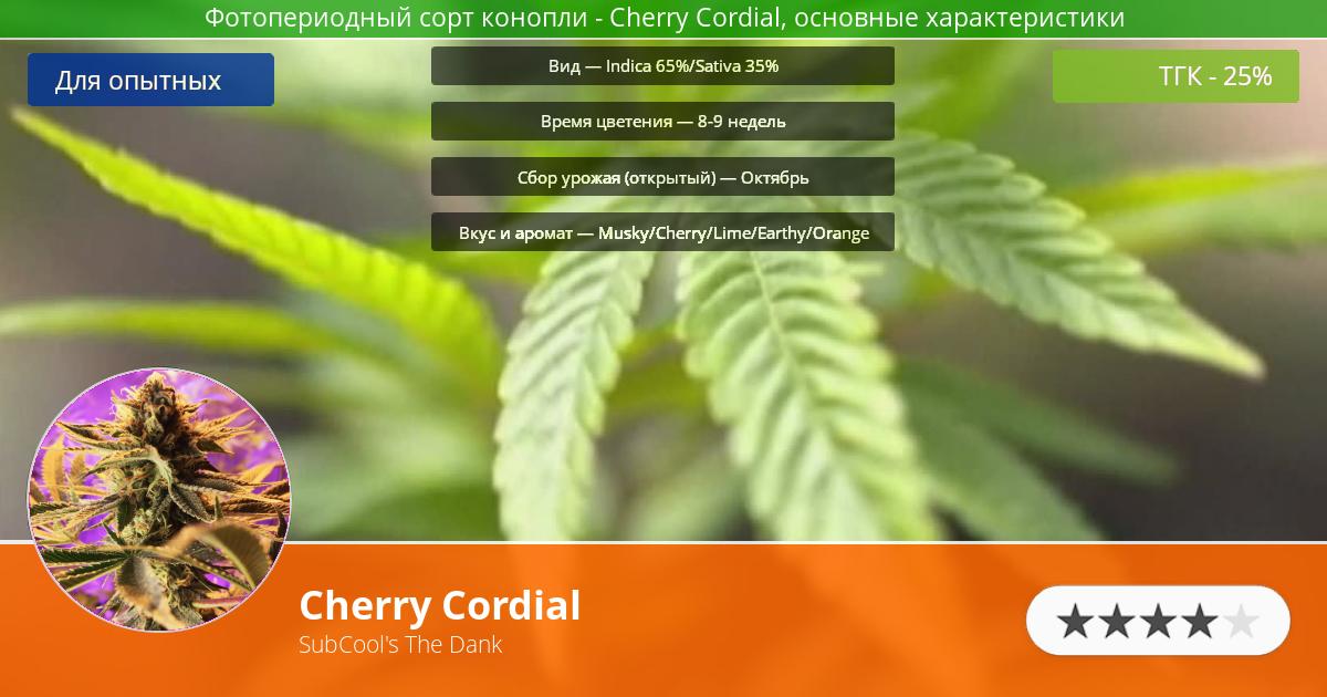Инфограмма сорта марихуаны Cherry Cordial