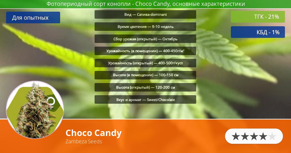Инфограмма сорта марихуаны Choco Candy