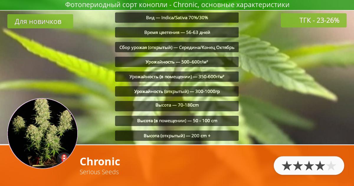 Инфограмма сорта марихуаны Chronic