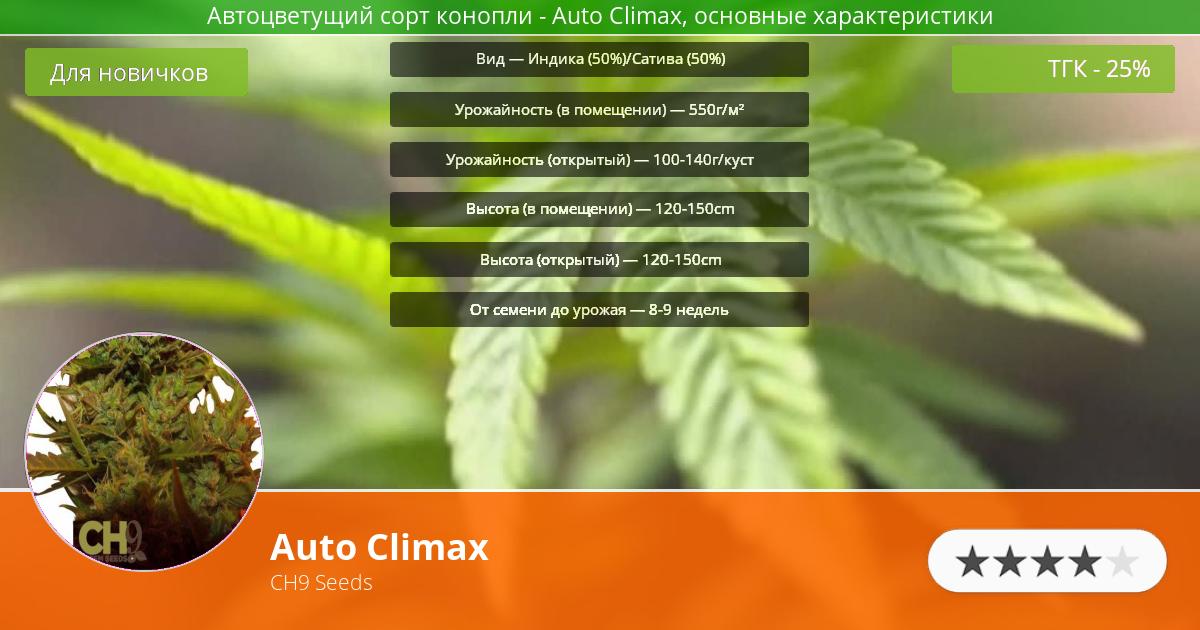 Инфограмма сорта марихуаны Auto Climax