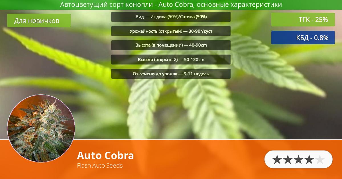 Инфограмма сорта марихуаны Auto Cobra
