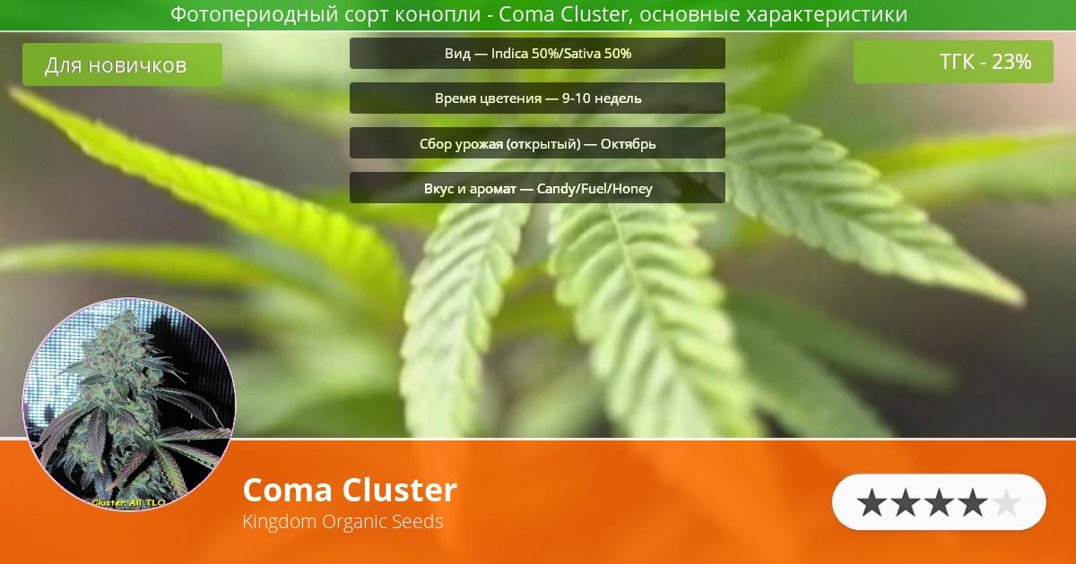 Инфограмма сорта марихуаны Coma Cluster