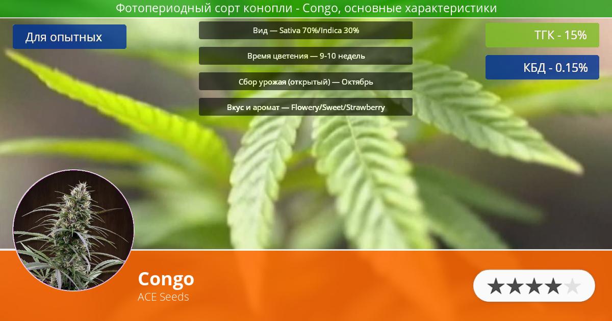 Инфограмма сорта марихуаны Congo