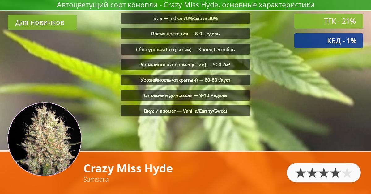 Инфограмма сорта марихуаны Crazy Miss Hyde