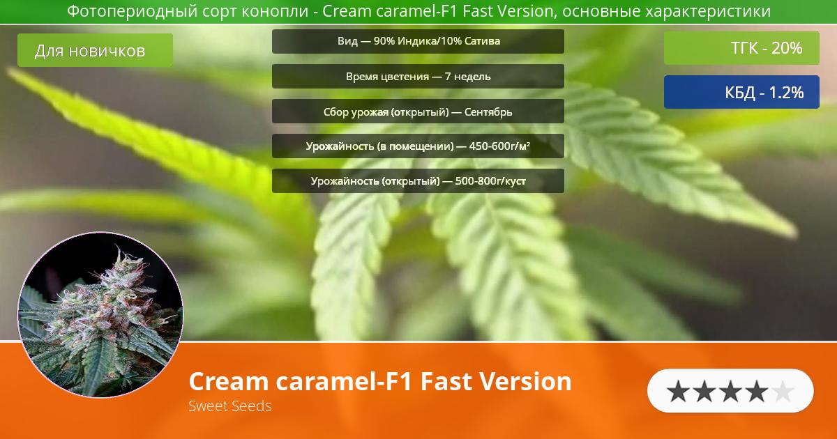 Инфограмма сорта марихуаны Cream caramel-F1 Fast Version