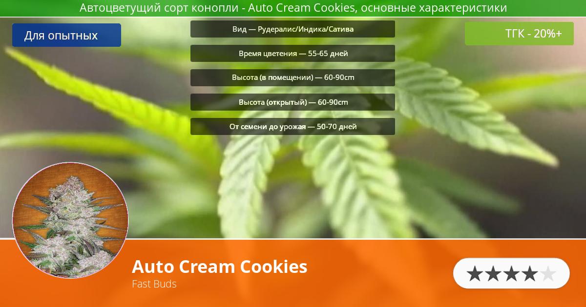 Инфограмма сорта марихуаны Auto Cream Cookies