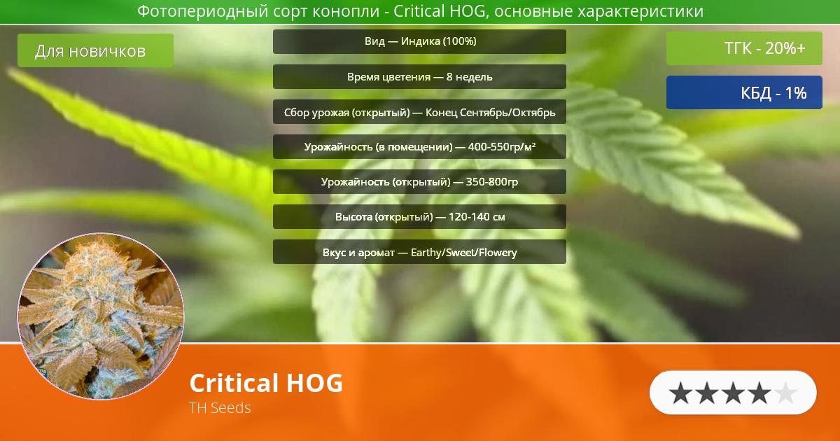 Инфограмма сорта марихуаны Critical HOG
