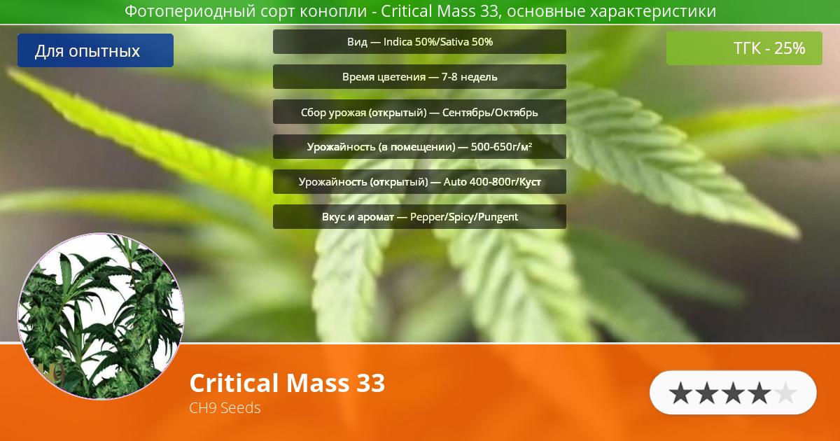 Инфограмма сорта марихуаны Critical Mass 33