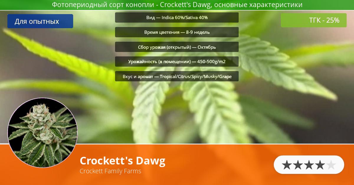 Инфограмма сорта марихуаны Crockett's Dawg