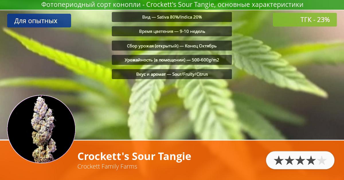 Инфограмма сорта марихуаны Crockett's Sour Tangie