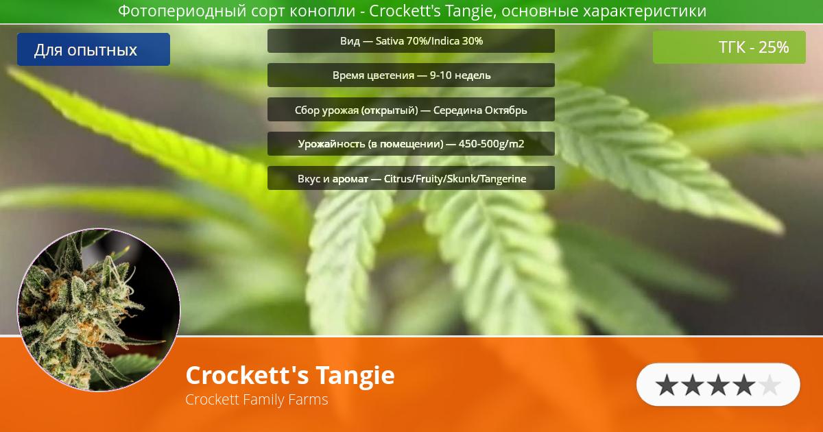 Инфограмма сорта Crockett's Tangie