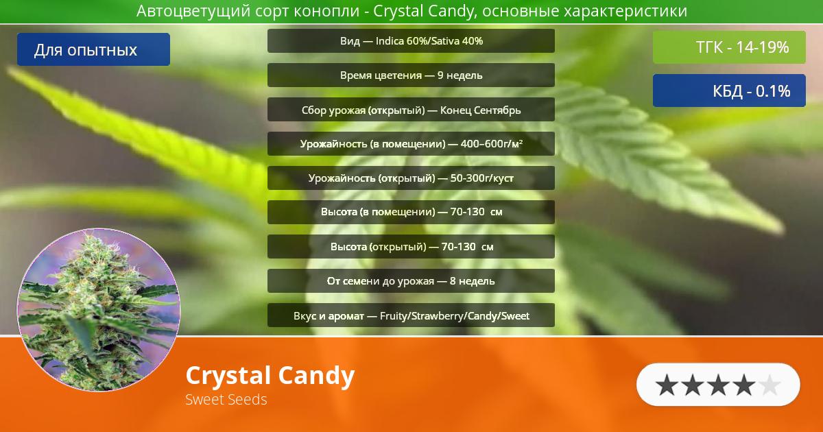 Инфограмма сорта марихуаны Crystal Candy