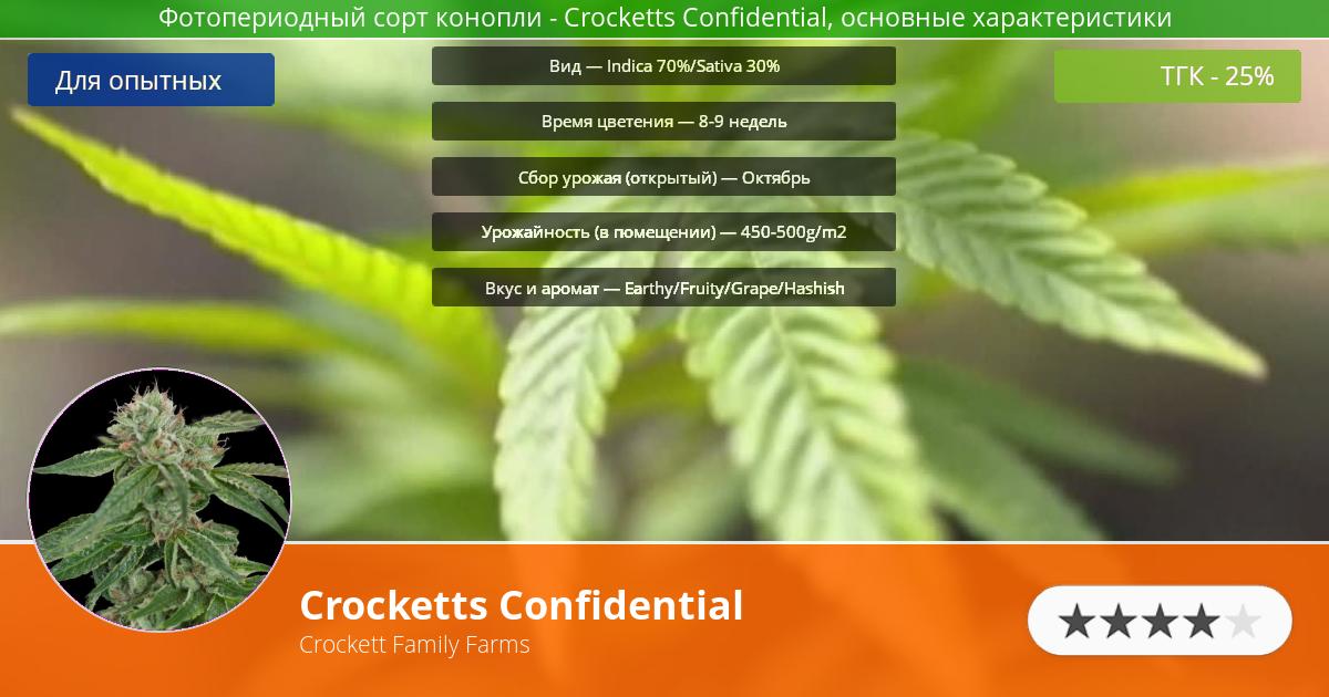 Инфограмма сорта марихуаны Crocketts Confidential