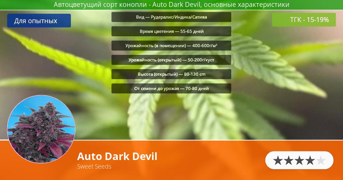 Инфограмма сорта марихуаны Auto Dark Devil