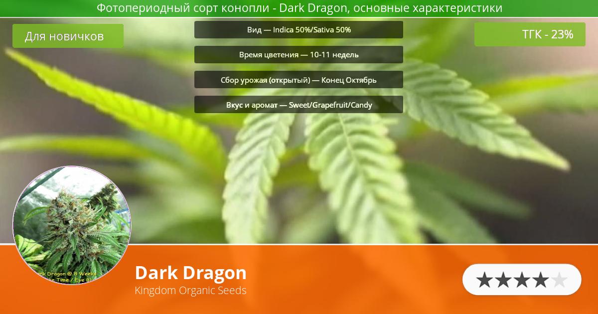 Инфограмма сорта марихуаны Dark Dragon