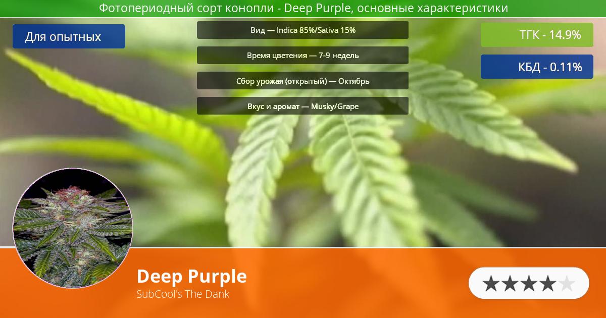 Инфограмма сорта Deep Purple