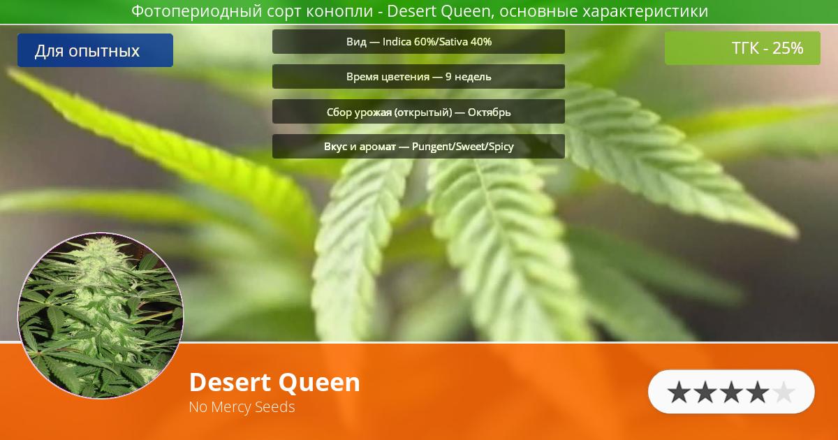 Инфограмма сорта марихуаны Desert Queen