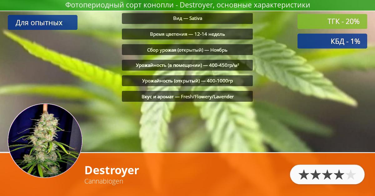 Инфограмма сорта марихуаны Destroyer