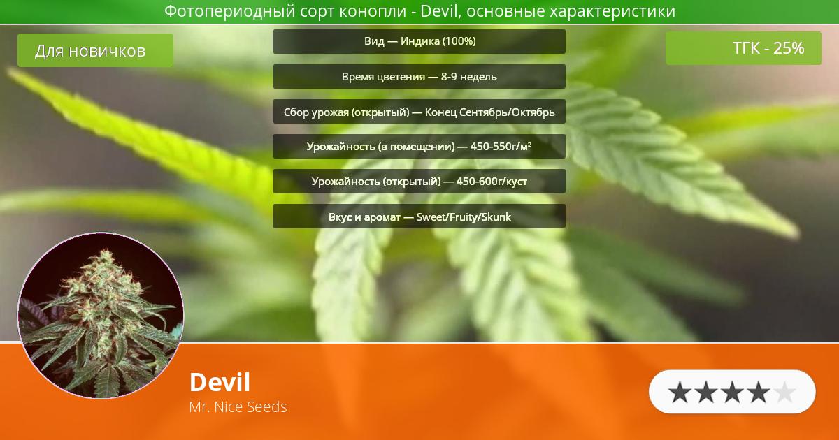 Инфограмма сорта марихуаны Devil