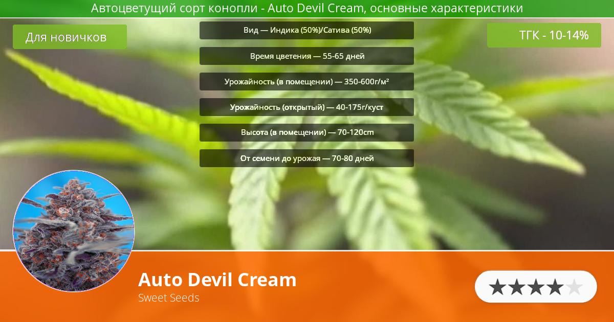 Инфограмма сорта марихуаны Auto Devil Cream