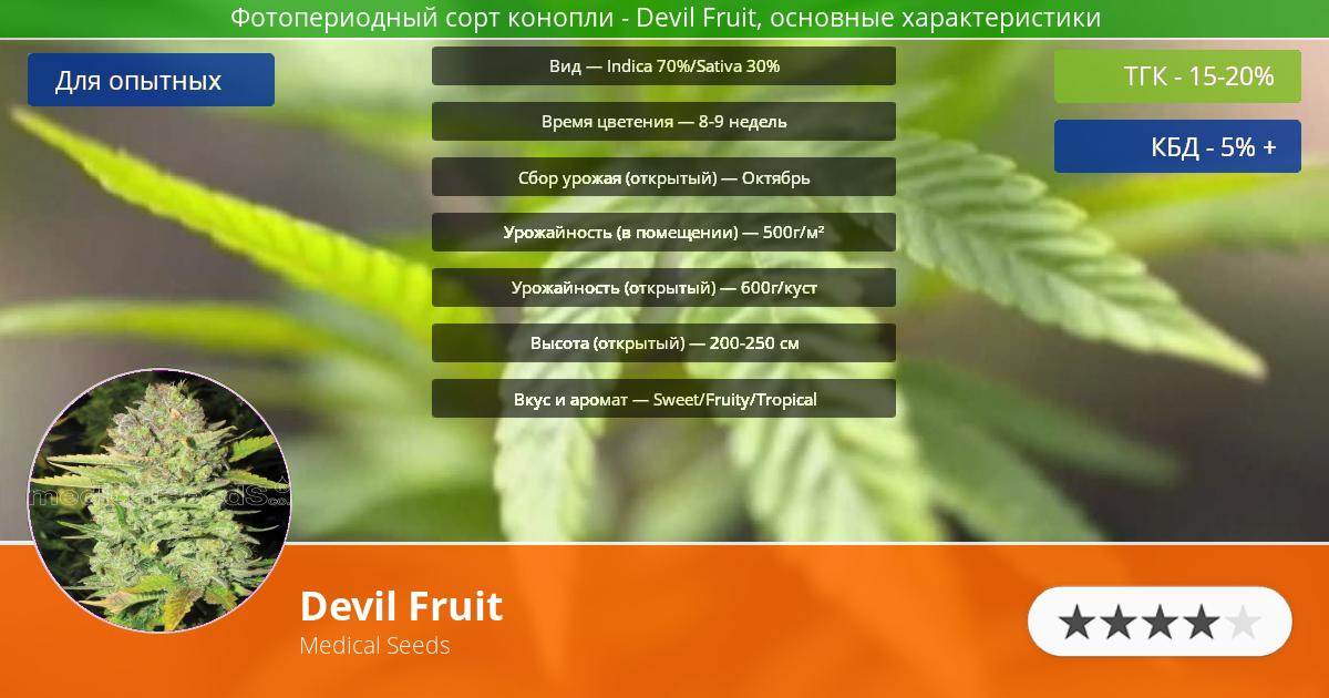 Инфограмма сорта марихуаны Devil Fruit