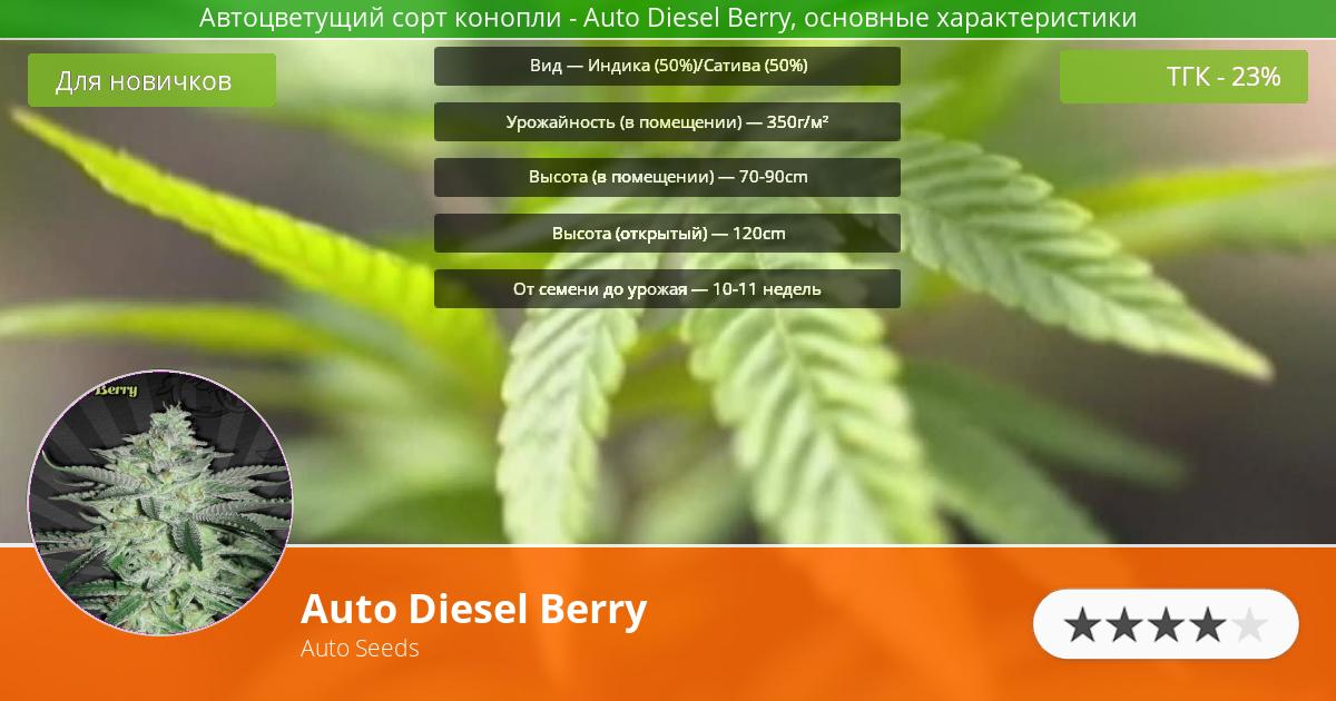 Инфограмма сорта марихуаны Auto Diesel Berry