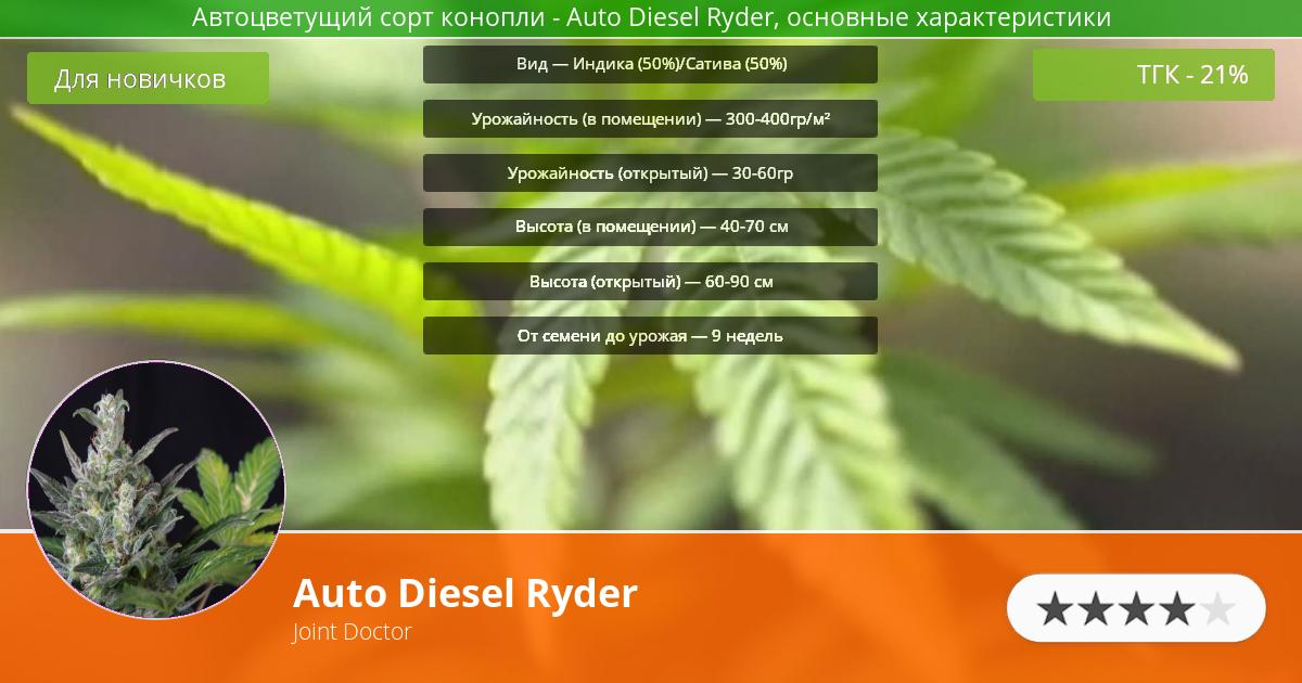 Инфограмма сорта марихуаны Auto Diesel Ryder