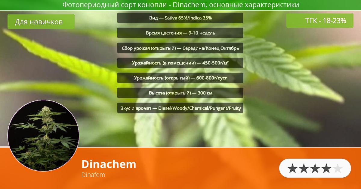 Инфограмма сорта марихуаны Dinachem