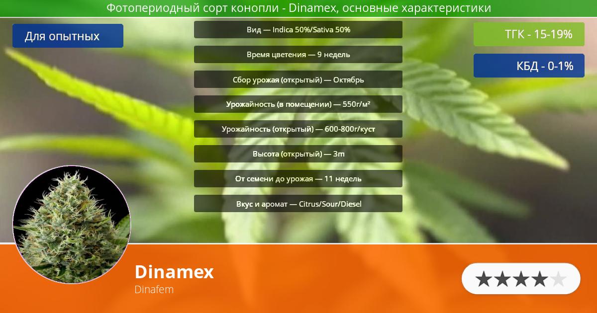 Инфограмма сорта марихуаны Dinamex