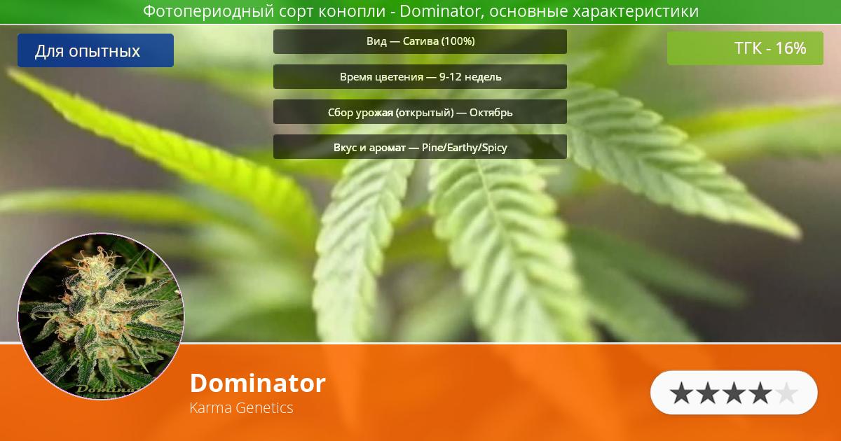 Инфограмма сорта марихуаны Dominator