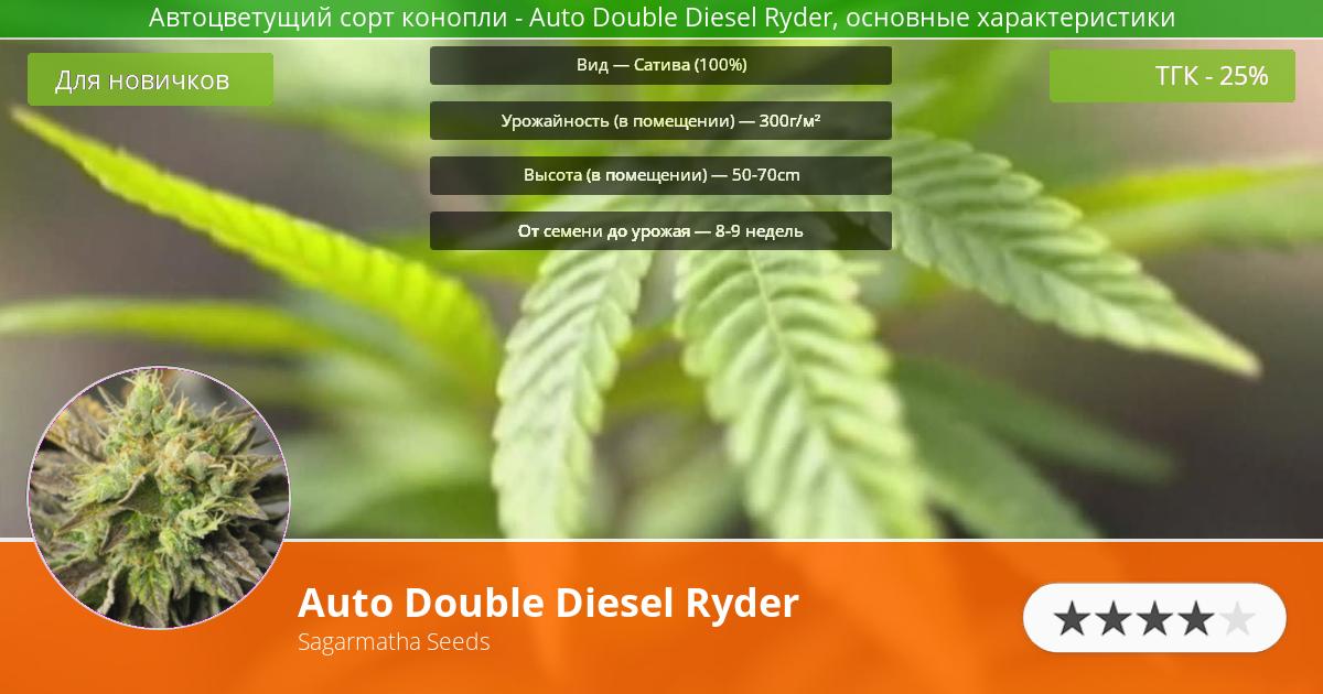 Инфограмма сорта марихуаны Auto Double Diesel Ryder