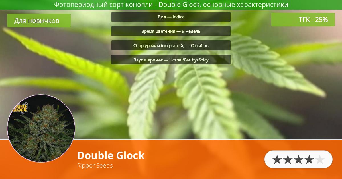 Инфограмма сорта марихуаны Double Glock