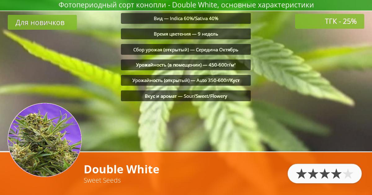 Инфограмма сорта марихуаны Double White