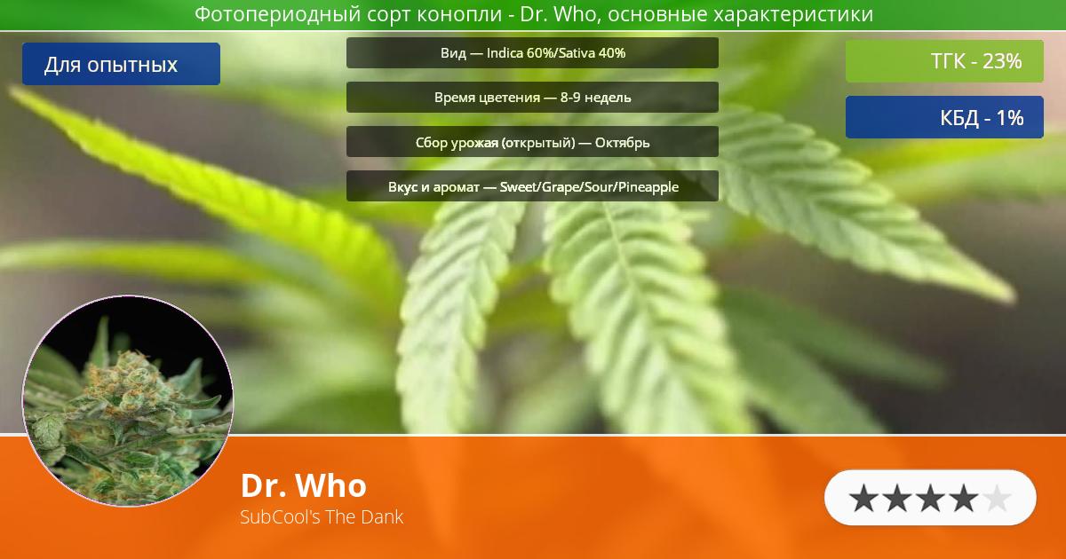 Инфограмма сорта марихуаны Dr. Who
